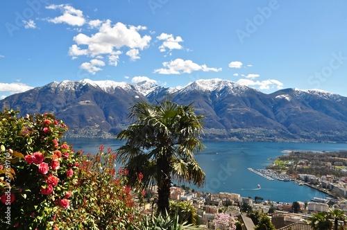 Photo  Seeblick mit Palme - Panorama auf die Schneeberge, die Stadt Locarno und den Lag