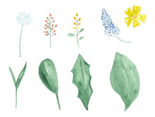 Watercolor Set Of Wildflowers And Leaves