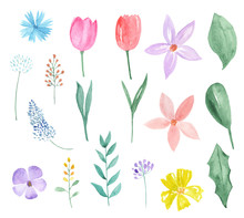 Watercolor Set Of Spring Flowers And Leaves