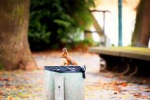 Squirrel On The Trash