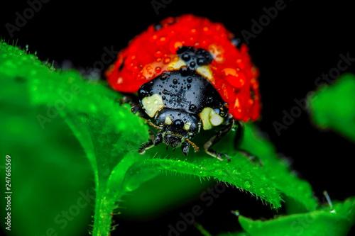 Papiers peints Pays d Afrique Beautiful ladybug on leaf defocused background