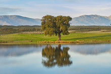 Landscapes With Oaks, Lake And...