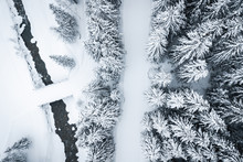 Snowy Forest With Drone In Win...