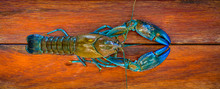 A Crayfish Also Known As A (yabbie) With Blue Claws On A Wooden Chopping Board