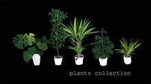 Potted Plants Collection. Succulents And House Plants. Hand Drawn Vector Art.  Set Of House Indoor Plant Vector Cartoon Doodle.