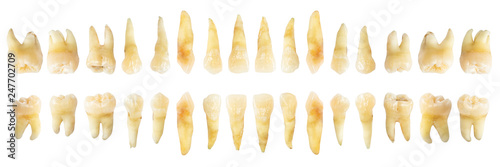 Fotomural Tooth diagram ( photography )