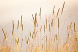 Miękkie tło ostrości dzikich ziół łąkowych - 247721314