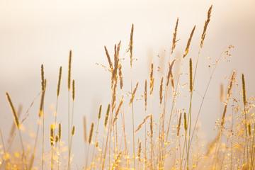 FototapetaSoft Focus background of wild meadow herbs