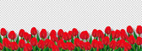 Fototapeta Tulipany - Red tulip flowers decorated transparent background, advertising header or banner design.