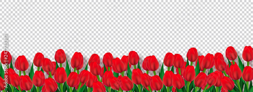 Photo  Red tulip flowers decorated transparent background, advertising header or banner design