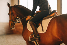Equestrian Horse Training