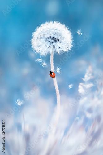 czerwona-biedronka-na-bialym-dandelion-obraz-w-delikatnych-pastelowych-kolorach-niebieskim-i-rozowym-tlo-wiosna-i-lato