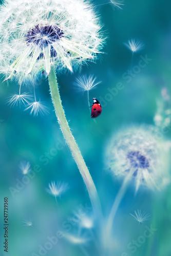 Piękna latająca czerwona biedronka na białym dandelion. Fantastyczny magiczny obraz. Wspaniały letni kraj. Kraina czarów.