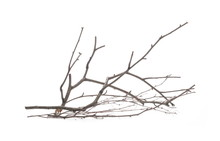 Dry Branch, Twig Isolated On White Background