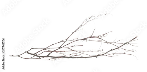 Dry branch, twig isolated on white background Fototapeta
