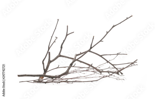 Fotografia  Dry branch, twig isolated on white background