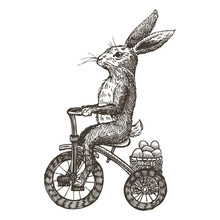Hand Drawn Bunny Riding Tricyc...
