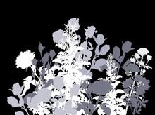 White And Grey Rose Bush Isola...