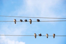 Pigeons Are Sitting On Wires, Birds Sitting On Power Lines Over Clear Sky