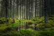 Leinwanddruck Bild - Boreal forest floor. Mossy ground and warm,autumnal light. Norwegian woodlands.