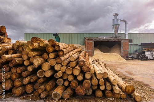 Pine wood sawmill with machinery for processing wood Fototapeta