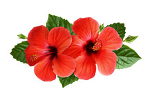 Hibiscus Flowers In Tropical Arrangement