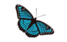 Blue Winged Butterfly Vector -...