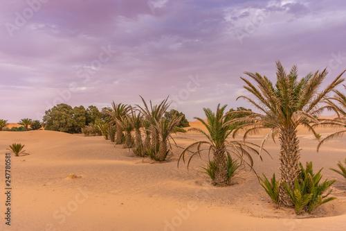 Garden Poster Natural Park Palms in the dunes of the Sahara Desert, Merzouga, Morocco