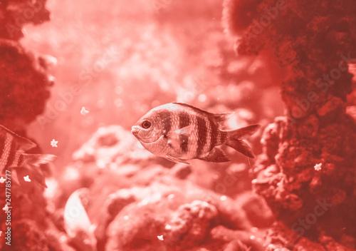 fish-swimming-in-the-ocean-against