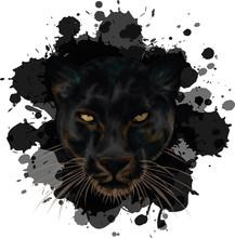 Black Panther On Grunge Background - Vector Illustration