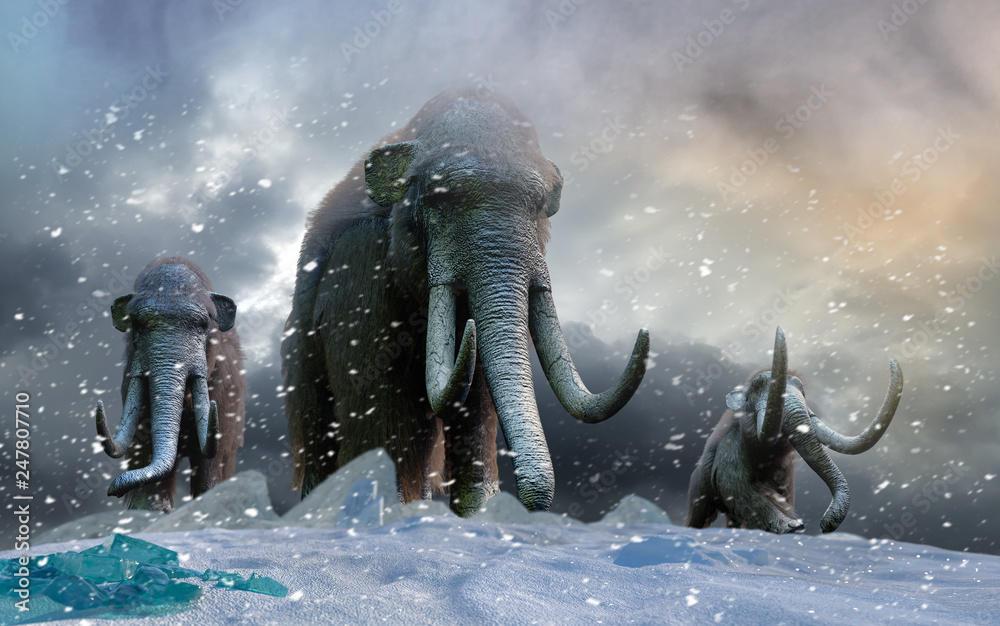 Fototapety, obrazy: herd of mammoths in the wild render 3d