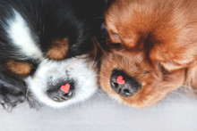 Dogs With Hearts