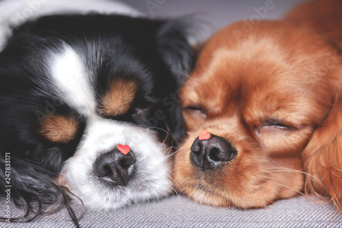Fotografering Dogs with hearts