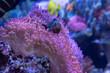 Leinwanddruck Bild - Pesce