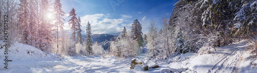 Winter landscape, panorama, banner - view of the snowy road in the winter mountain forest