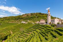 Vigne Di Prosecco Nelle Colline Di Rollè - Valdobbiadene, Veneto.