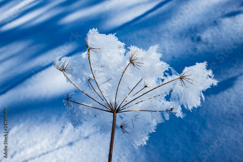 Poster Printemps snow covered plant close up