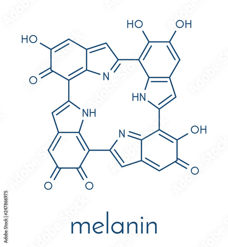 Melanin (eumelanin), proposed oligomeric structure model Canvas-taulu