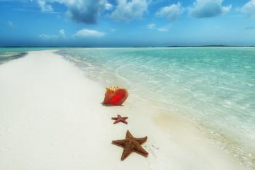 rozgwiazda i muszla na wymarzonej plaży z czystą wodą, Bahamy