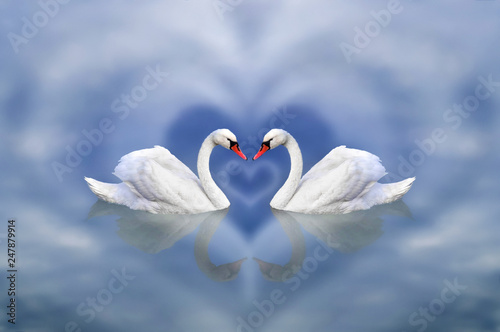 Fototapety, obrazy: Greeting card from February 14 as an invitation to Valentine's Day. A pair of swans in love framed by a cloudy heart against a blue sky pond.