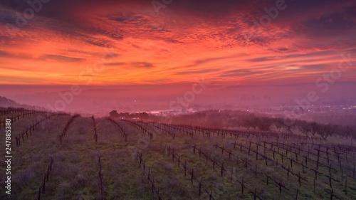 Poster Crimson Paso Robles Sunrise