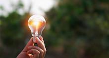 Hand Holding Light Bulb In Nat...