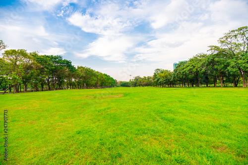 Foto auf Leinwand Baume Green grass field with tree public park