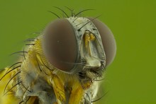 The Extreme Close Up Of Macro Photography