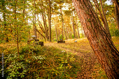 Fotografering  old leaved bunker of the Russian army in a forest in Poland
