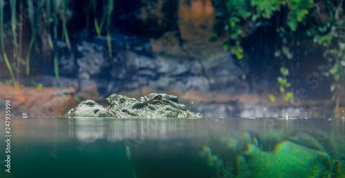 Recess Fitting Crocodile Krokodil im Wasser, Gefahr Australien Reise Backpacker Abenteuer Cairns