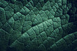 canvas print picture - Leaf of a plant close up, dark green