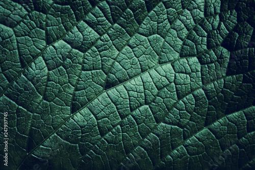 In de dag Macrofotografie Leaf of a plant close up, dark green