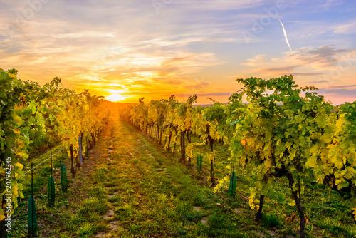 Spoed Foto op Canvas Wijngaard Wineyard in Lower Austria