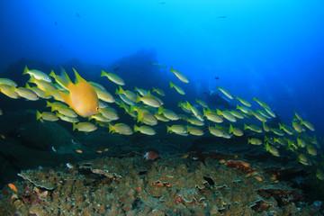 Fototapeta na wymiar Scuba diving, coral reef and fish